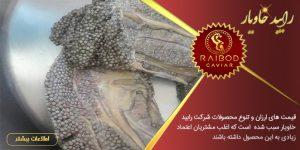 شرکت های تولید خاویار در ایران