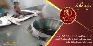 مراحل تولید و صادرات خاویار ایران