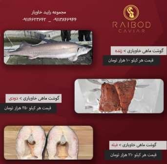فروش فیل ماهی