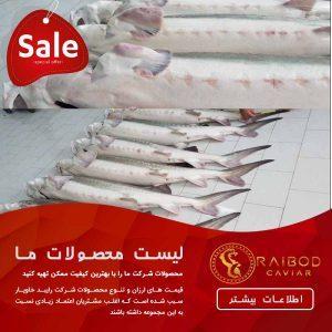 قیمت ماهی خاویار درجه یک در بازار تهران